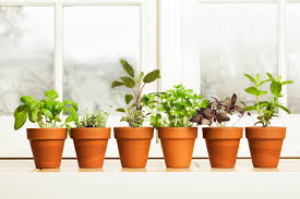 A Guide to Growing Kitchen Windowsill Herbs | Martha Stewart